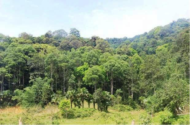 Loss of rainforests & livelihoods in the annamite mountain range