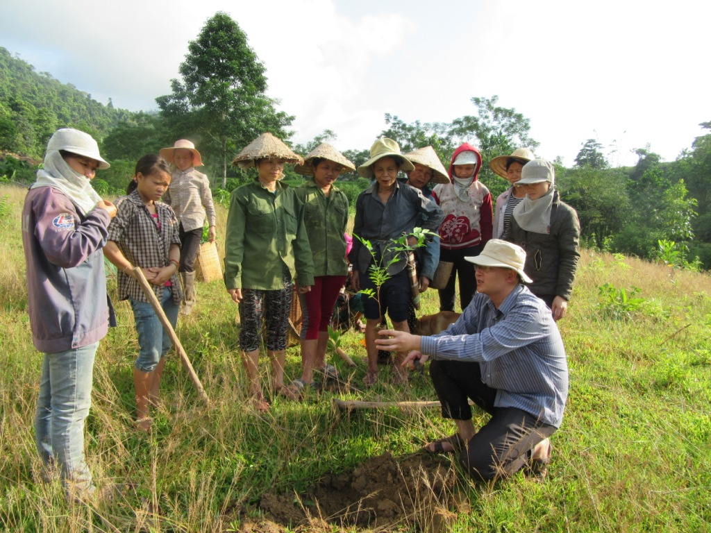Reforestation with indigenous forestry species, a suitable approach for upland people in Que Phong district, Nghe An province