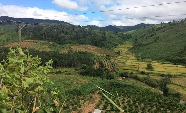 Return traditional forestland to community and reduce costs issue