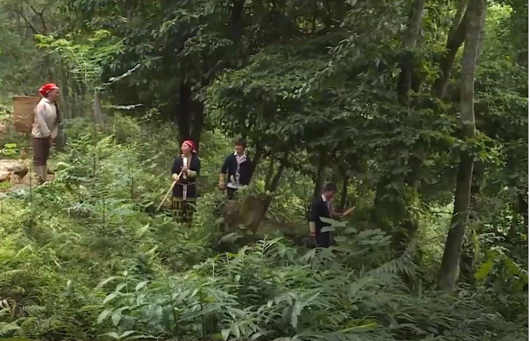 Chuyện giữ rừng của đồng bào dân tộc thiểu số