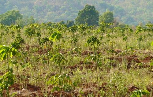 Kinh nghiệm của khu vực trong vận động chính sách đất rừng cho người dân tộc thiểu số
