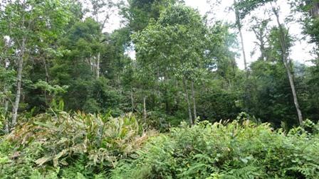 Sinh kế gắn với rừng: Mô hình nâng cao thu nhập và bảo vệ rừng hiệu quả